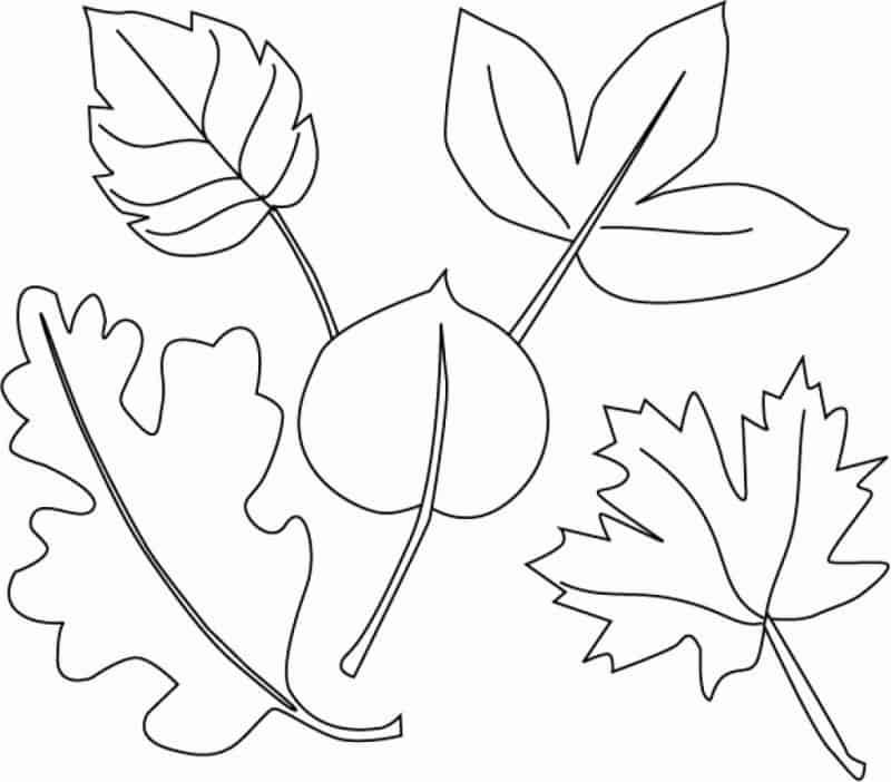 Moldes de folhas de papel
