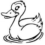 Desenhos de pato para imprimir e colorir